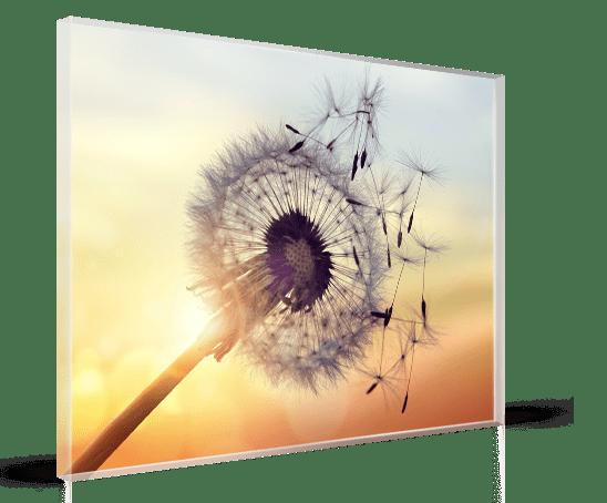 acrylic dandelion