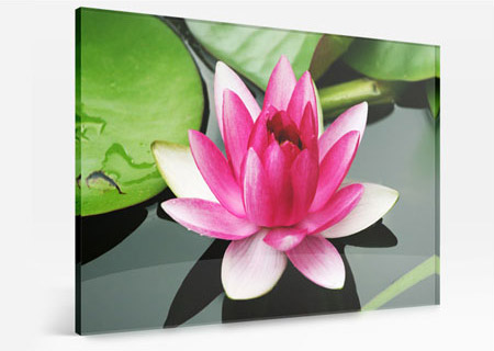 acrylic lotus colours
