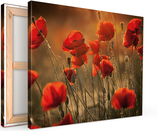 canvas print flower field