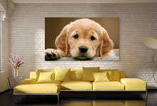 huge puppy photo acrylic over couch